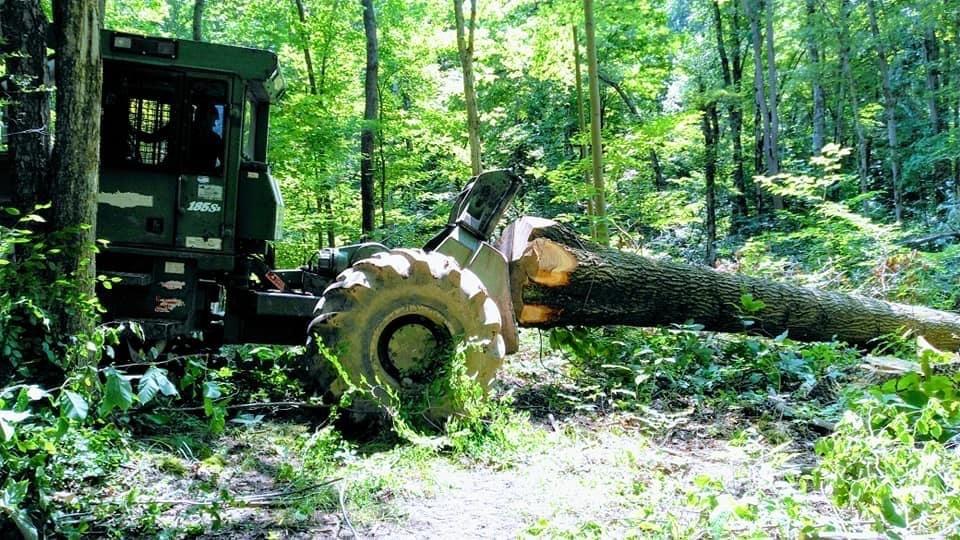Logging Timber