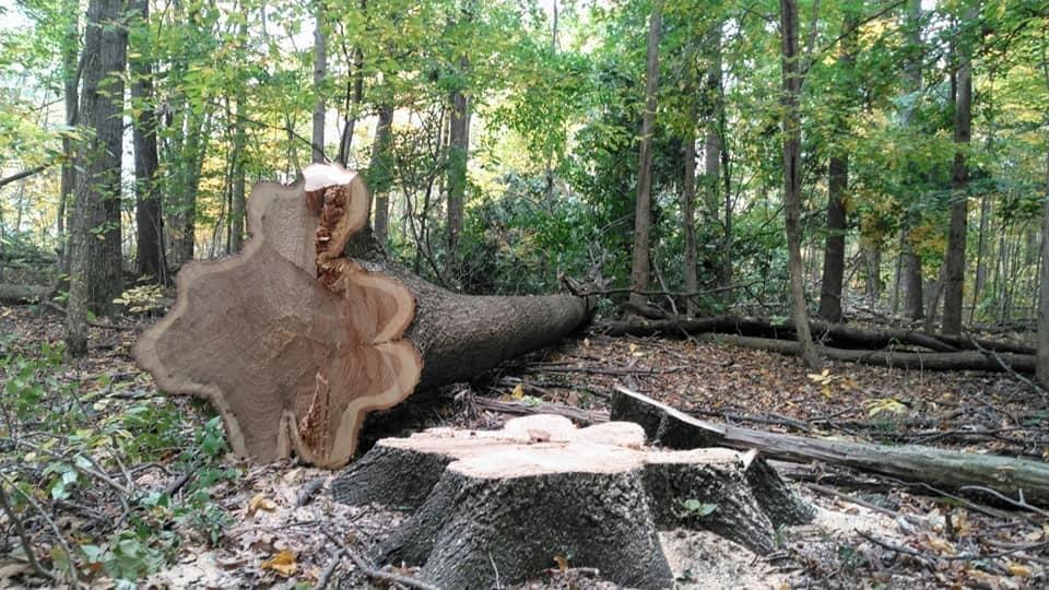 Ohio forest management in practice.