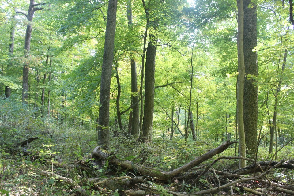 Forest management services.